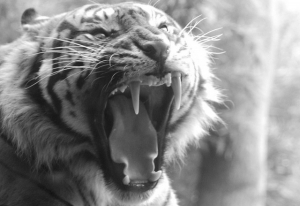 Anger Management: Taming the Tiger!
